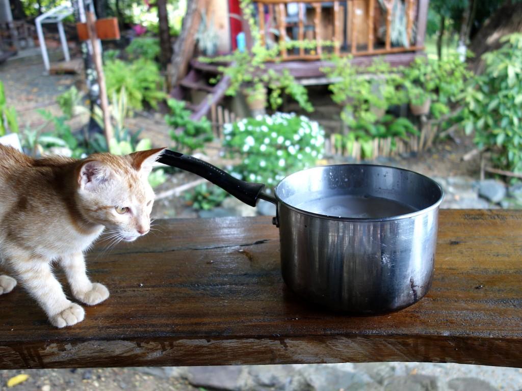 milk4cat